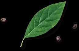 flower-vasconia